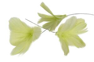 Fjäderblomma limegrön 12-pack
