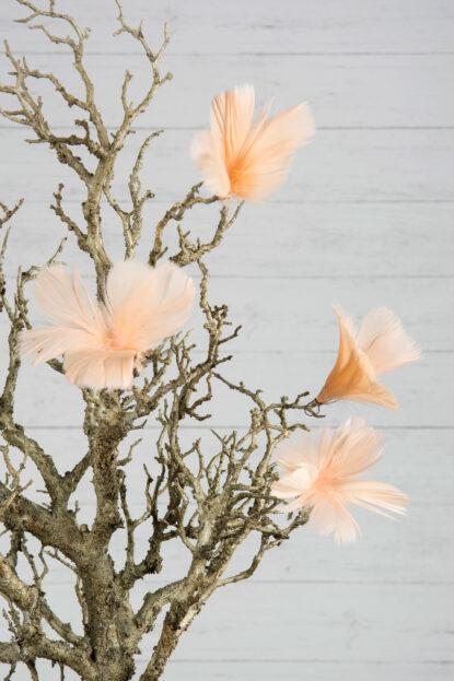 Fjäderblomma ljus aprikos 12-pack 2