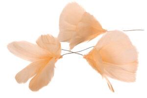 Fjäderblomma ljus aprikos 12-pack